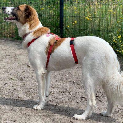 Veiligheidstuigje voor honden