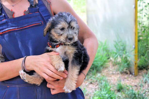 Puppy in de armen van een rescuer