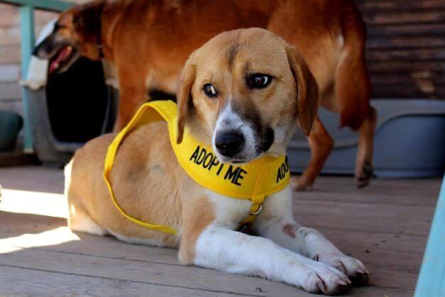 """Hond draagt tuigje met tekst """"Adopt me"""""""